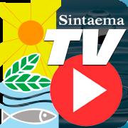 TV Sintaema
