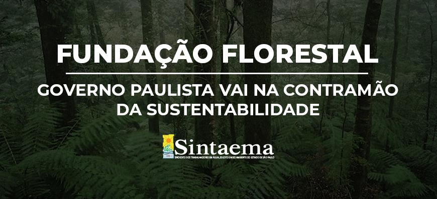 A inconsequente extinção da Fundação Florestal: Governo paulista vai na contramão…